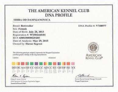 Shiba DNA