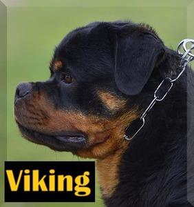 Viking 2B