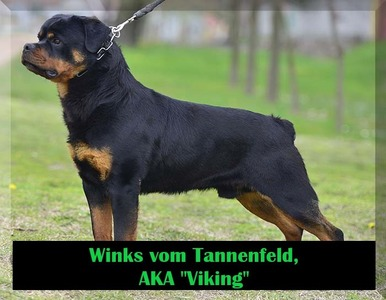 Viking 4B