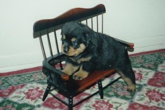 Pup on a Bench